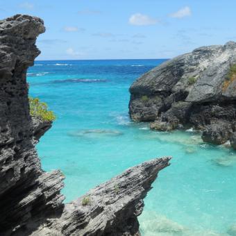 Bermudy w świetnej cenie