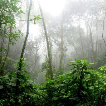 Do serca Amazonii poniżej 2000 zł!
